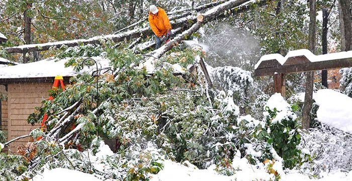 TREE SERVICE – HOW TO PREP YOUR TREES FOR WINTER TIME